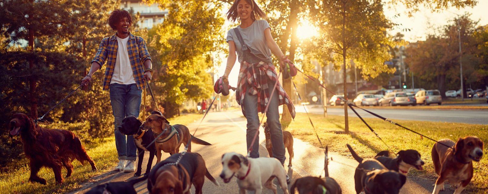 Girl walking with several dogs on leashes